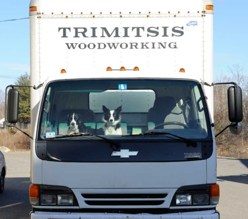 Two dogs in cab of Isuzu box truck