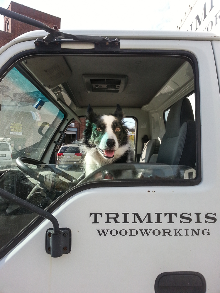 Border collie in driver's seat of Isuzu box truck