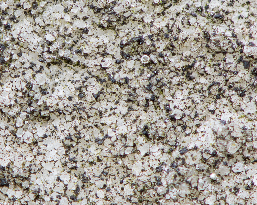 Close-up of lichen growing on eroded marble gravestone