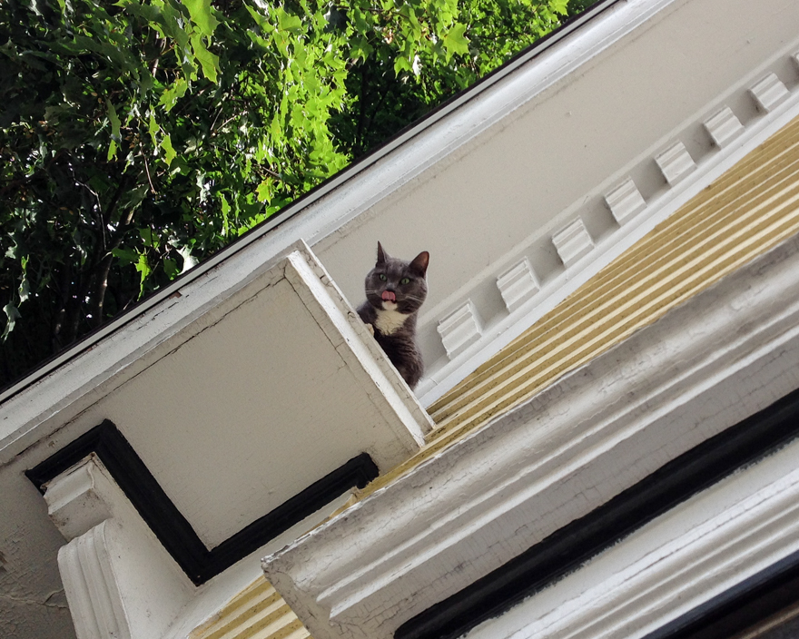 Cat stuck on rooflet