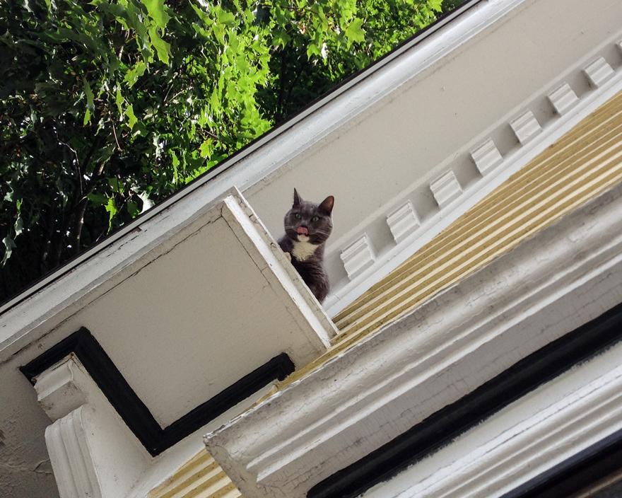Cat stuck on rooflet
